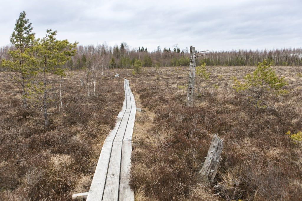 Att gå längs en spång i ett av Smålands naturområden ger dig nästan en känsla av att vandra i Lappland.