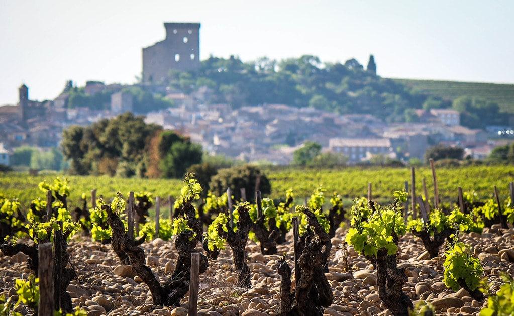 Chateauneuf-du-Papes omtalade vinodlingar.