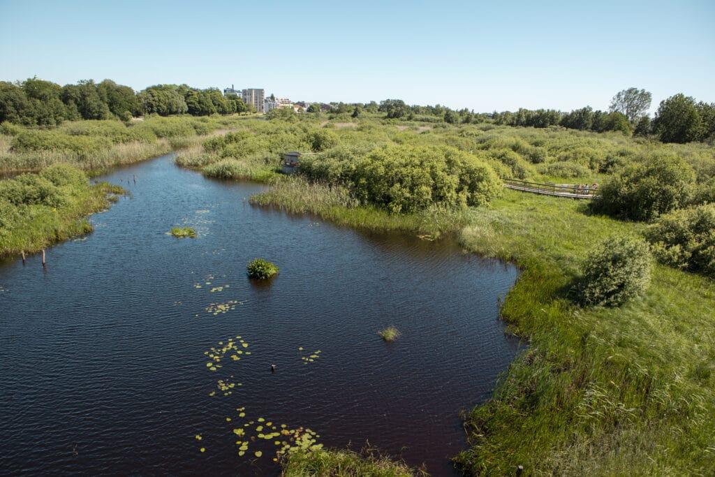 Uppifrån besökscentrets terass ser man ut över det bördiga, gröna vattenriket.