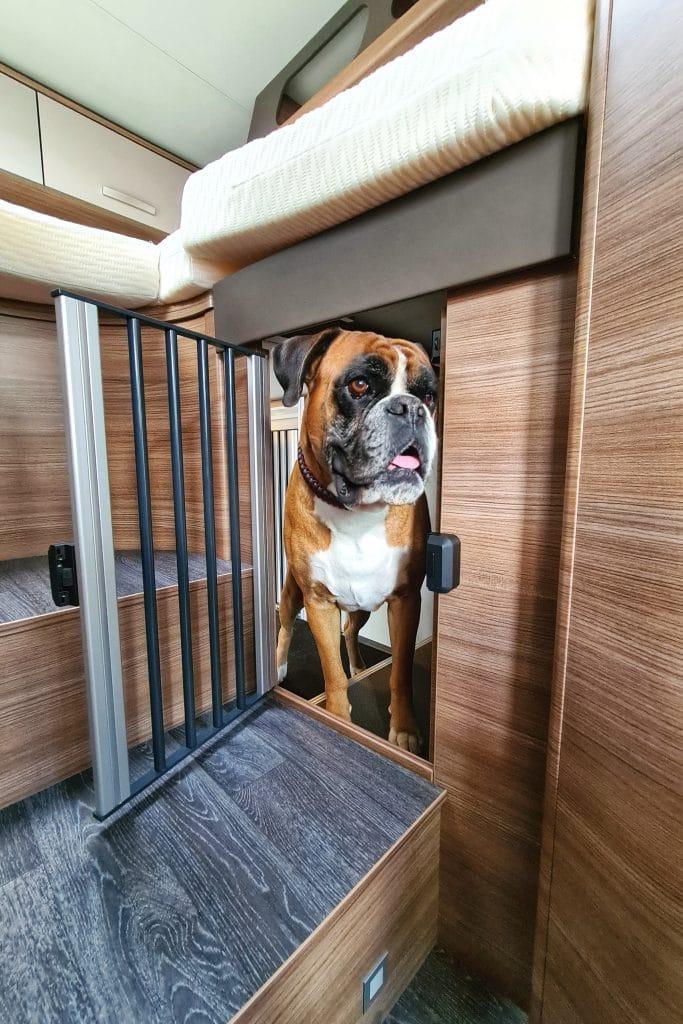 Lucky Dog Camper är ett nytt tillval som ger hunder ett eget boende.